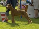 Irish Terrier Specialty, Finland.