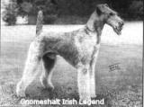 Gnomeshalt Irish Legend