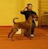 Irish Terriers around the world.